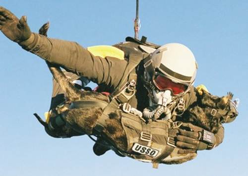 Special Forces HALO jump with dog.  Both on oxygen.